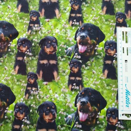 Rottweiler Digital print Jersey metervare
