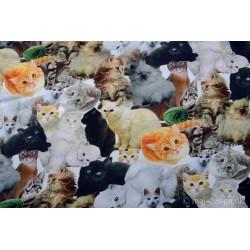 Katte Egern bl dyr Digetalt print 3 varianter
